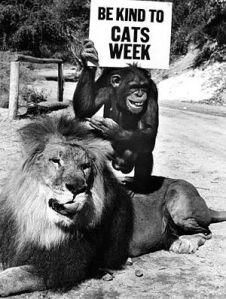 daktaritvshow.wordpress.com daktari judy the chimp clarence the cross-eyed lion
