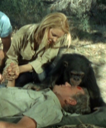 12-daktari tv show terror in the bush marsh and paula father and daughter judy the chimp