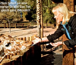 cheryl miller of daktari with giraffe in march 2012