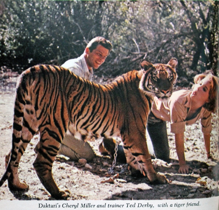 cheryl miller of daktari with tiger in Africa U.S.A. TV Guide April 1966