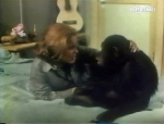 cheryl miller and judy the chimp from season one of daktari in her room