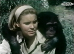 cheryl miller as paula tracy and judy the chimp looking worried on daktari