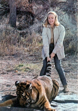 cheryl miller as paula tracy with sarang the tiger on daktari