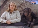 cheryl miller and judy the chimp shooting the breeze on daktari
