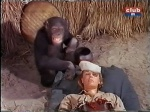 cheryl miller as paula tracy being comforted by judy the chimp on daktari
