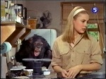 judy the chimp helps paula tracy on daktari