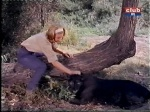 paula tracy comforts a panther on daktari played by cheryl miller