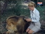 cheryl miller and clarance the cross-eyed lion daktari season four - Copy