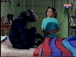erin moran and judy the chimp daktari season four