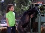 erin moran judy the chimp daktari season four-3