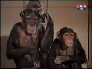 judy the chimp and toto daktari season three