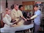wameru gang with judy the chimp and prince the dog daktari season three