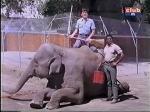 yale summers and hari rhodes with elephant on daktari