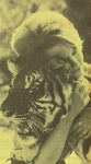 daktaritvshow.wordpress.com cheryl miller hugging tiger