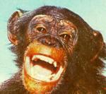 daktaritvshow.wordpress.com judy the chimp2