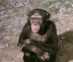 daktaritvshow.wordpress.com judy the chimp4