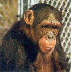daktaritvshow.wordpress.com judy the chimp5