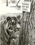 daktaritvshow.wordpress.com tiger