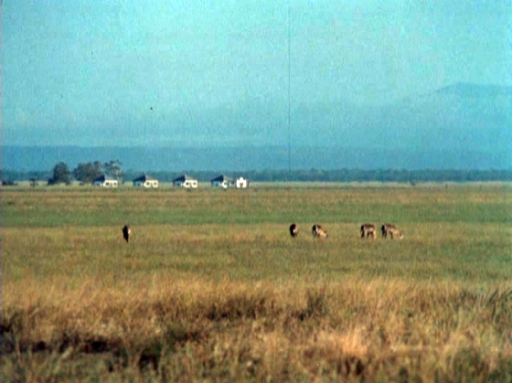 Abandoned houses near Gorongoza with lions in the foreground