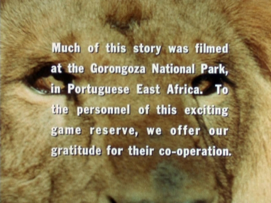 The end credits which acknowledge filming at Gorongoza National Park