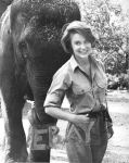 CHERYL MILLER LOVELY STAR OF DAKTARI 2 ORIG PHOTOS WITH ELEPHANT & A CHIIMPANZEE